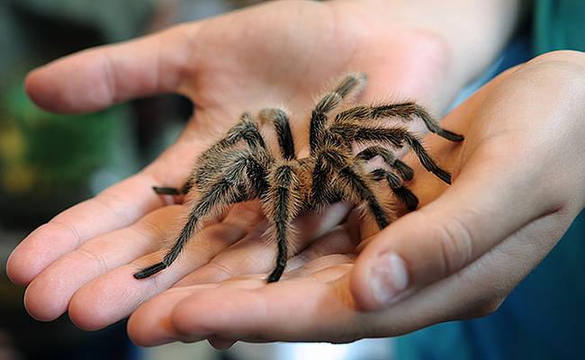 Lęk przed pająkami to arachnofobia.
