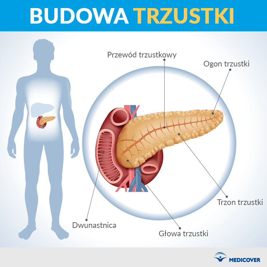 Trzustka znajduje się wgórnej części brzucha
