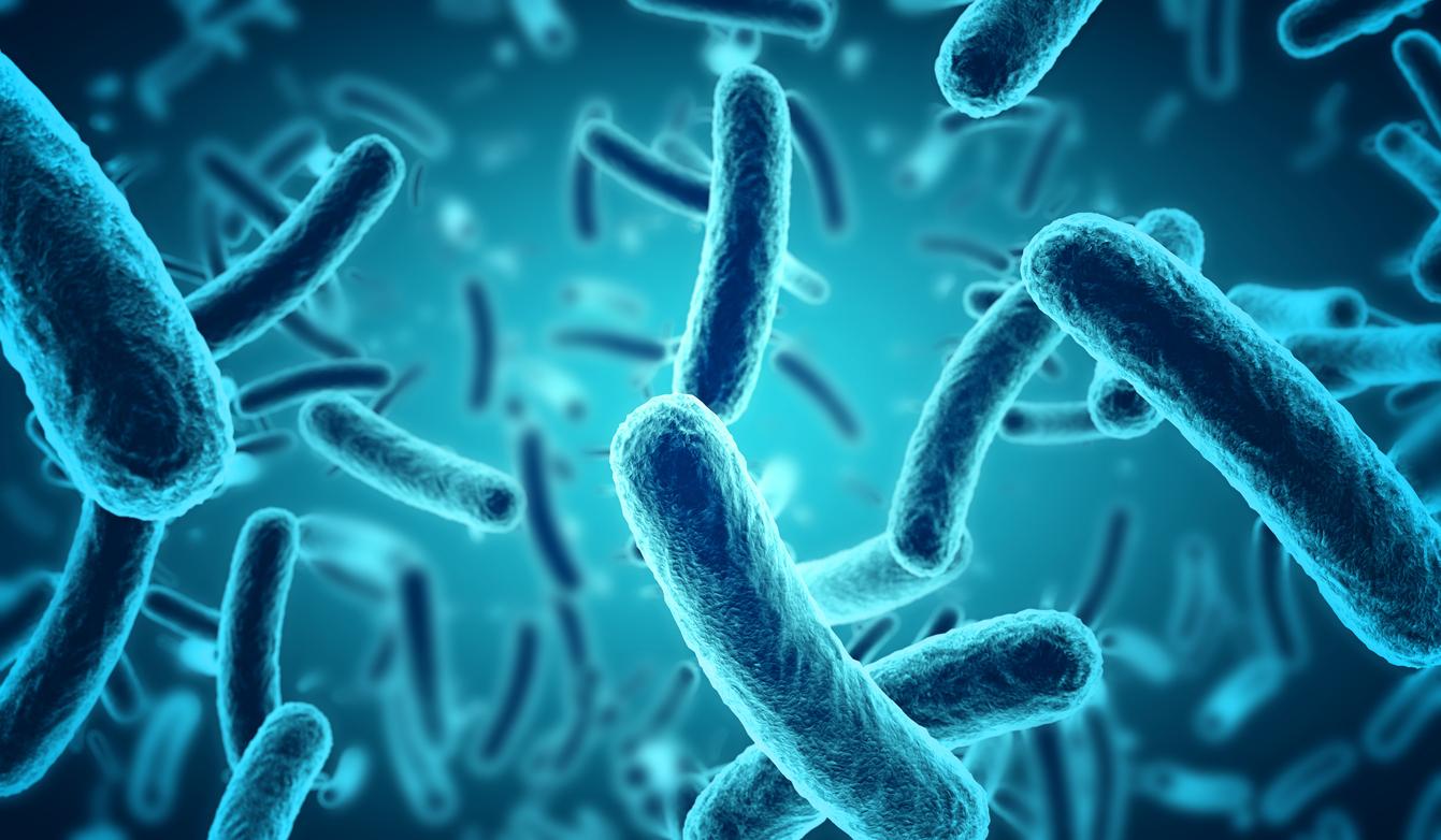 Bakterie probiotyczne.