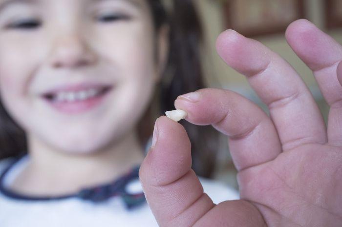 Zęby mleczne wypadają między 6. a12. rokiem życia.