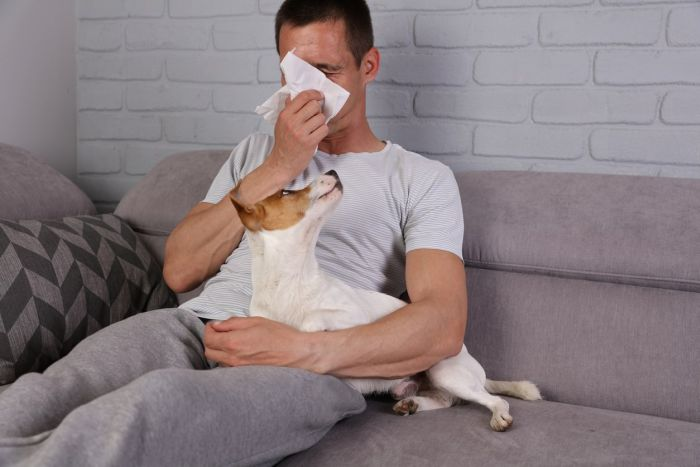 Włos psa należy do najczęstszych substancji uczulających