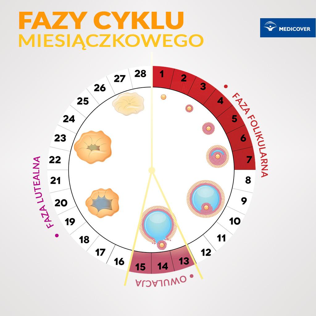 Fazy cyklu miesiączkowego.